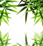 bamboo with reflection in the water,Zen atmosphere. poster