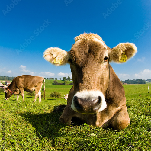 Deurstickers Koe Happy swiss cow on green grass