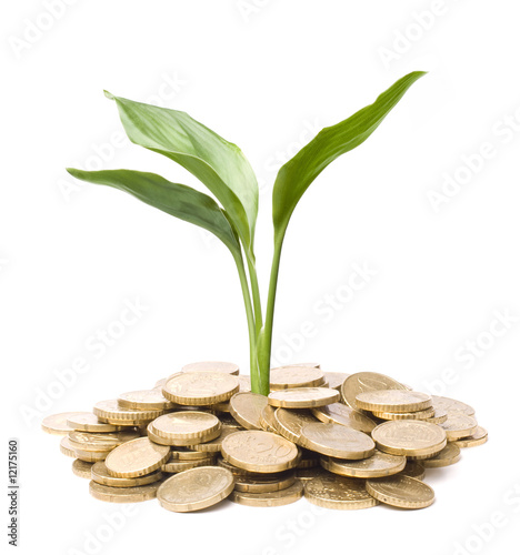 Plant growing on coins symbolizing financial growth