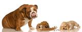 hungry cocker spaniel puppy and  bulldog sharing food poster