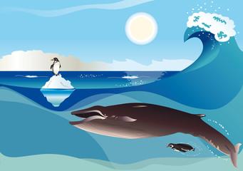 Balena e pinguini