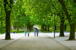 Avenue with green trees