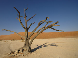 Deadvlei tree