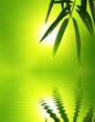 bamboo leaf with reflection in the water,Zen atmosphere.