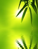 Fototapety bamboo leaf with reflection in the water,Zen atmosphere.
