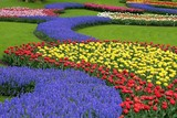 Multicolored flower bed, Keukenhof, the Netherlands
