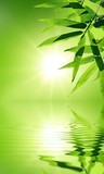 bamboo leaf with reflection in the water,Zen atmosphere. poster