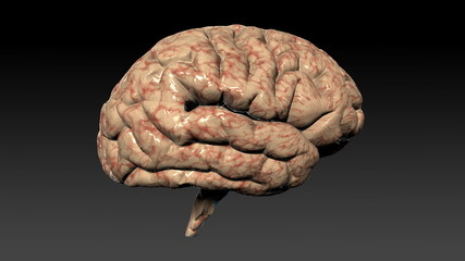 Human brain assembling,seamless loop,Alpha Channel