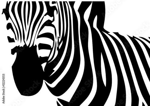 Tapete Zebramuster