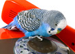 Blue wavy parrot and telephones.Take the number...