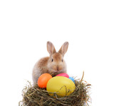 Happy Easter says bunny - Fine Art prints