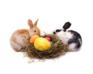 Teamwork of Easter bunnies
