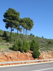 road and wood in Israel