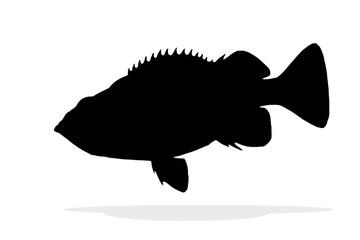 silhouette of sea perch isolate