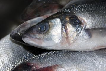 Pile of fresh fish, close-up