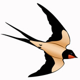 Flying swallow poster