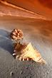 Quadro shell