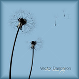 vector dandelion (all seeds are separate objects) poster