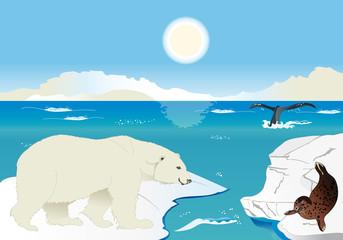 Orso polare, foca e balena