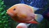 Vodnář malé ryby