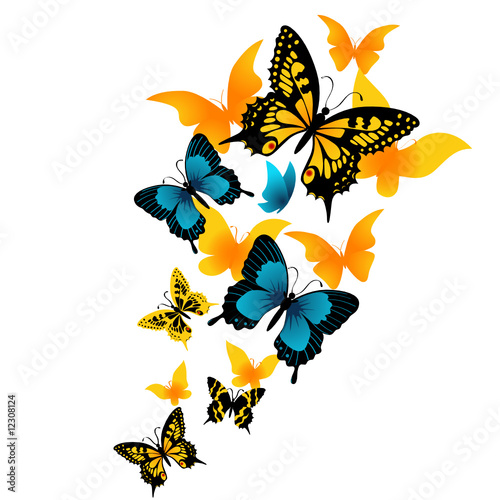 The butterfly. Vector illustration