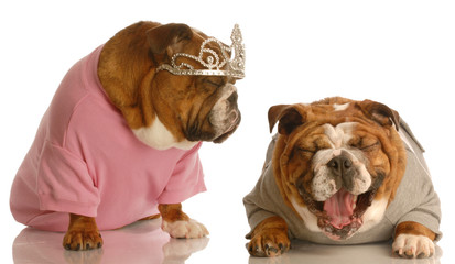 bulldog laughing at another dog dressed up with tiara on..