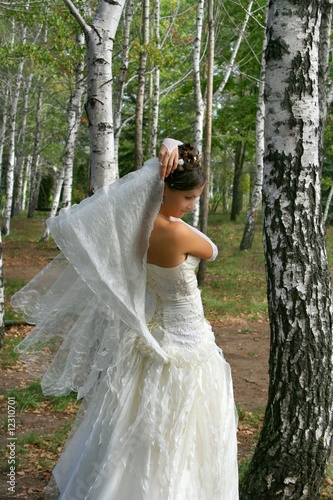 Beautiful bride in birch grove