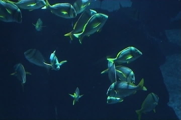 Shoal of tropical fish in blue sea
