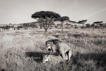 Sex in the Serengeti