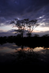 African Sunrise Scenery