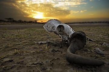 Death in Africa (skull)