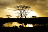 Serengeti Hippo Pool at Sunrise