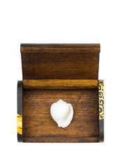 white seashell in the wooden box.