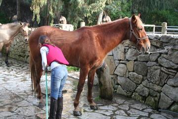 niña limpiando caballo