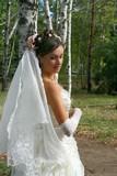 Beautiful bride in birch grove poster