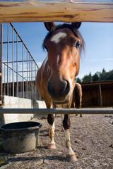 Blickkontakt mit einem Pferd
