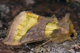 Burnished Brass poster