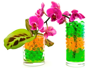orchid and plants in glass with hydrogel