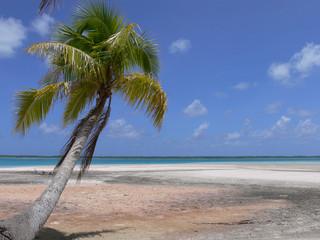 polynesiecocotier