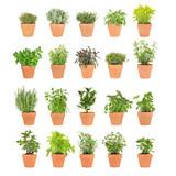 Fototapety Herbs in Pots