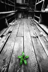 hope - determined plant growing through old floor