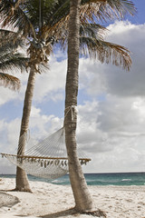 Beach Palm trees and hammocks