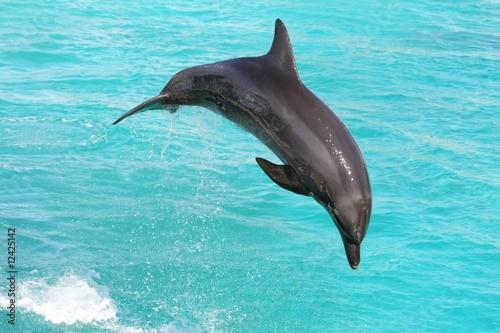 Foto op Canvas Dolfijn Dolphin Jumping