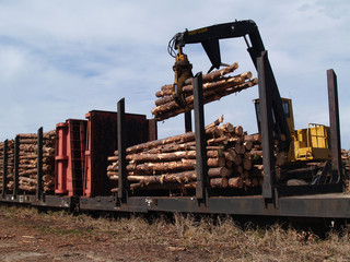Loading Cut Trees on a Railcar