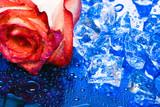 Fototapeta kwiat - wakacje - Kwiat