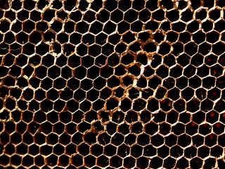Bee Hive 12