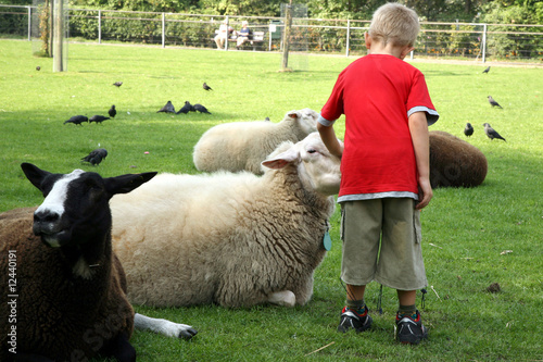 Boy adn sheeps