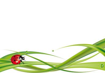 Coccinella su erba n. 2