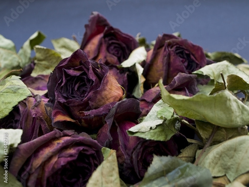 Old dried red roses against a dark background