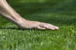 Green Grass - 12453116